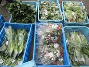 集まった新鮮な農産物