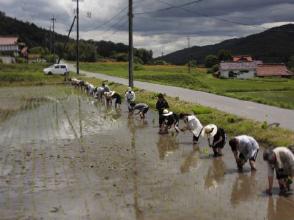 一列に並んで田植え作業