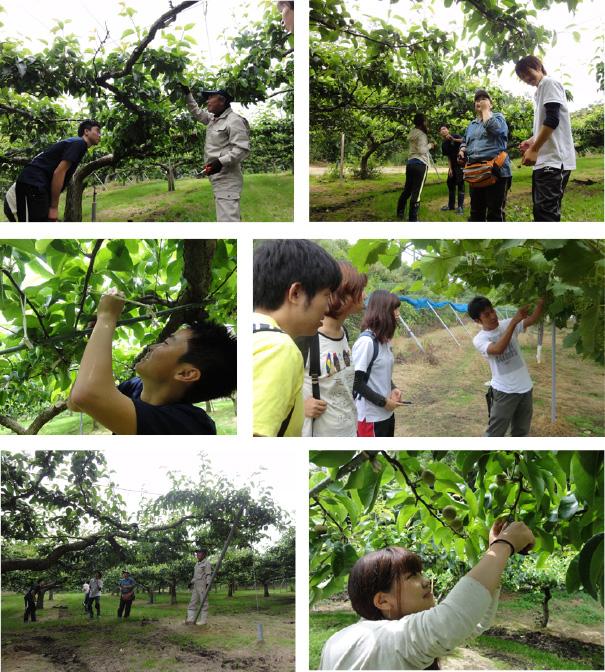果樹経営法人での栽培管理3