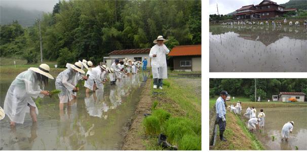 大規模稲作経営法人での米の栽培管理3