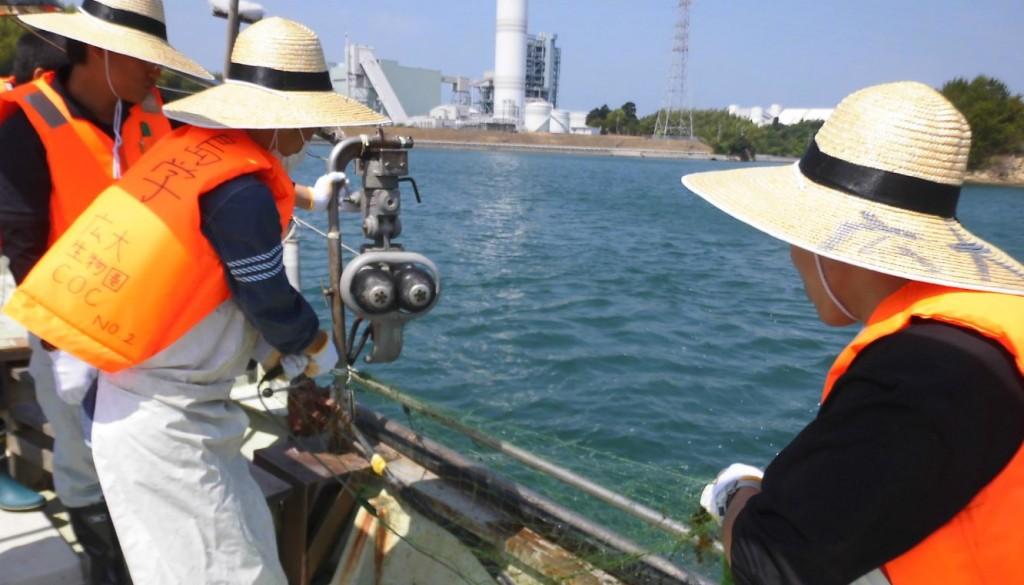 大崎海藻2