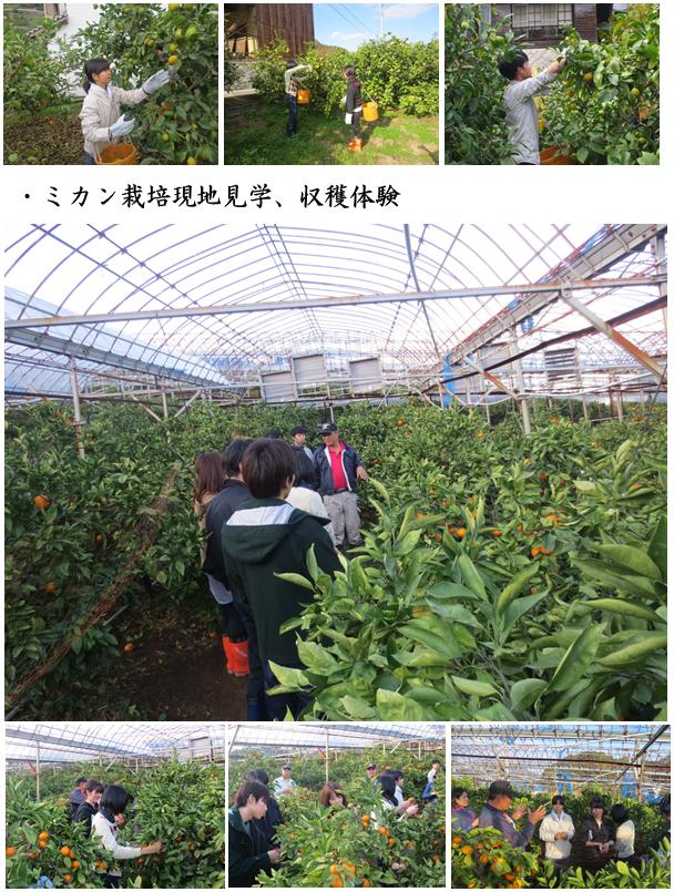 呉市豊町大長(4)