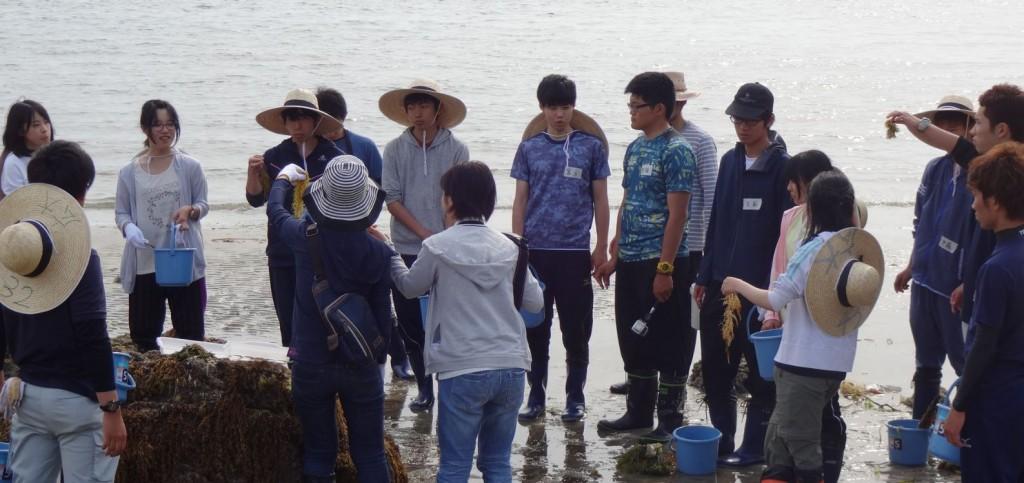 大崎海藻6