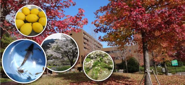 地(知)の拠点大学による地方創生推進事業inq03