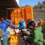地(知)の拠点整備事業 大崎上島におけるみかん園作業実習活動を行いました。