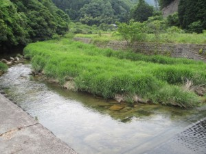 renkei-otagawa02
