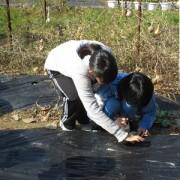 職場体験学習ボランティアを行いました(2)